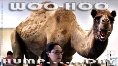 Hump Day Camel Woo Woo Woo Hoo Hump Day